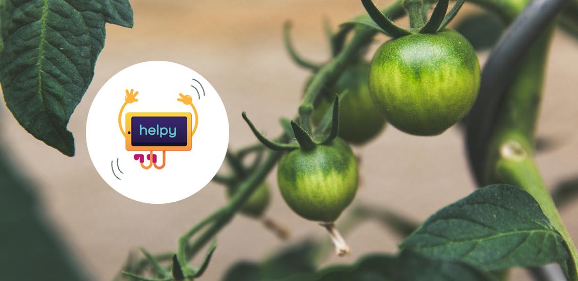 Réalisez vos semis de tomates cerises